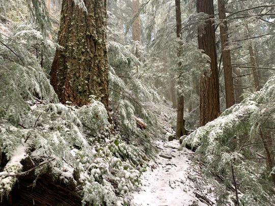 The North Ridge Trail takes hikers from the forest up into the snow and the summit of Marys Peak, the tallest mountain in the Coast Range.