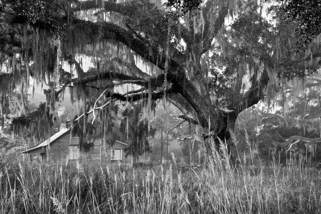 Tall Timbers worked with Beate Sass, a gifted photographer living in Tallahassee, who was interested in our tenant farm restoration project.