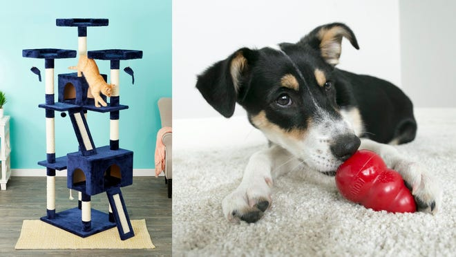 18 cult-favorite pet products you can get from Chewy