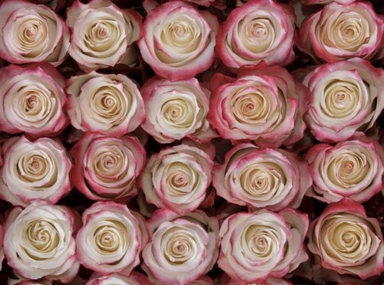 """""""I guess the way I see it is, she was truly the love of his life, and even though she's not here in body she's no further away in his heart,"""" said Laurie Van Ark, owner of B/A Florist, about the anonymous donor who donated a large rose bouquet to another couple after his wife died."""