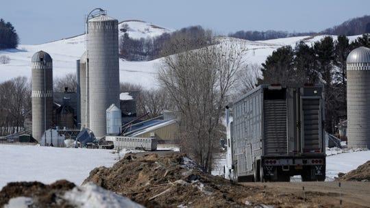 A truck leaves Paul Adams' family farm in Eleva with dairy cattle headed to a Texas mega farm.