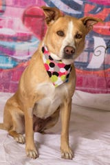 Ariel is available for adoption at Friends for Life Animal Rescue's adoption center at 952 W. Melody Ave. in Gilbert. For more information, visit Friends for Life online at azfriends.org or call 480-497-8296.