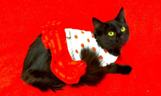 Peli is available for adoption at 11129 W. Michigan Ave., Youngtown.  Call 623-876-8778 after 10 a.m.