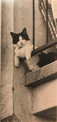 """A local cat keep an eye on its apartment complex from the balcony """"catbird"""" seat in this undated Standard-Times photo."""