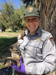 Laura Shaskey, a wildlife biologist with the National Park Service, holds a Santa Cruz Island fox pup that is about to undergo a health exam.
