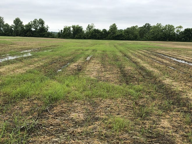 More and more plants are escaping glyphosate plus dicamba burndown according to University of Tennessee weed scientist Larry Steckel.