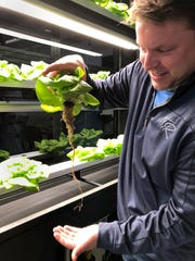 Casey Todd pulls a Bibb lettuce plant from his grow wall to show the root system that takes in nutrients from water that it continually pumped through the hydroponic growing system.