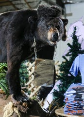 The Cocaine Bear, now shown at the Kentucky for Kentucky Fun Mall, was a 175-pound black bear from Chattahoochee National Forest that died after eating about 75 pounds of cocaine that was lost by Kentuckian drug smuggler Andrew Thornton in 1985. The Georgia state examiner had the animal taxidermised. Waylon Jennings once owned the stuffed bear. March 4, 2020.