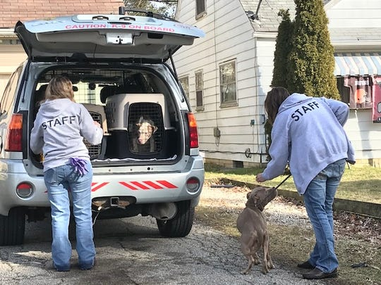 Salli Tschantz, left, and Toni Ross, employees of the Humane Society of Richland County, rescue three mixed terriers who were left behind when their owners moved from 79 Eleanor Ave.