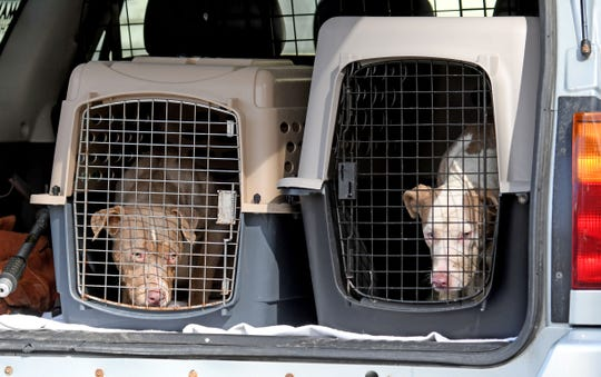 A total of three mixed terrierswere rescued Thursday from an empty house at 79 Eleanor Avenue.