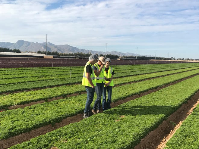 Interns Jansen Van Mallari and Bailey George work with Kelsey Neppel in the field at Duncan Family Farms.