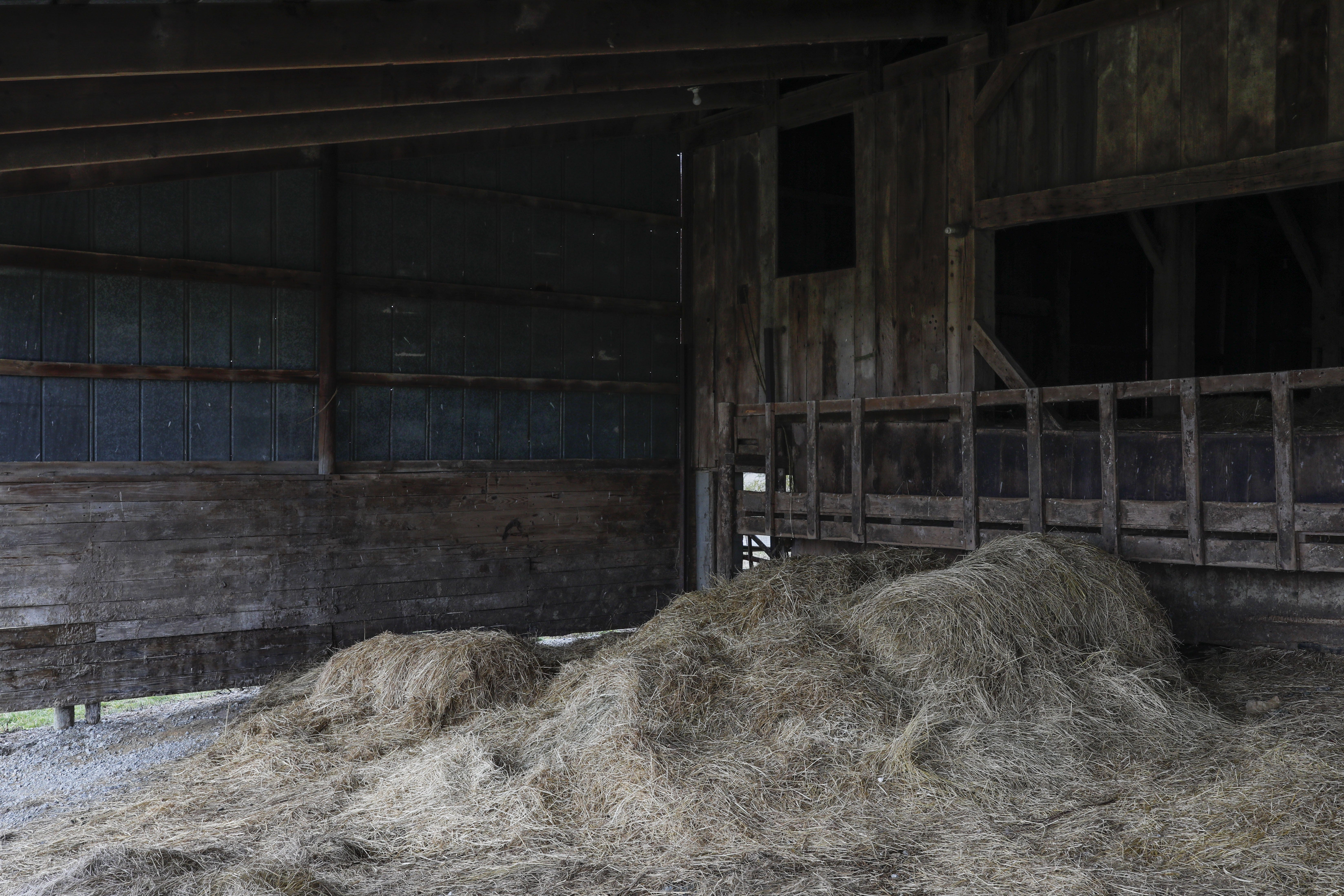 Hay still sits in a barn once owned by Charlie Utter's cousin, a farmer who died by suicide in July 2017, on Tuesday, March 3, 2020 in Georgetown, Ohio. After his death, Charlie sold off some of his cousin's remaining cattle, but some remnants of the farm still remain almost three years after his death. [Joshua A. Bickel/Dispatch]