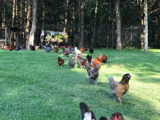 Rent the Chicken rents egg-laying chickens to homeowners in the United States and Canada and provides a custom-made coop and chicken feed. The company comes for the birds at the end of egg-laying season and brings them back the following year.