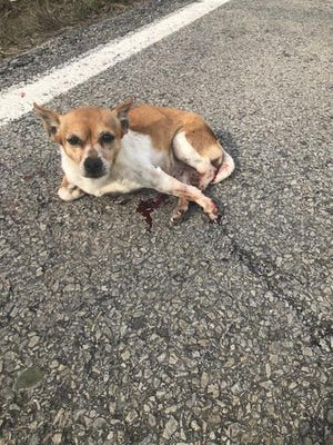 A pet dog was shot and killed by the Spencer County Animal Control director after getting hit by a car, but family says she could have been saved.