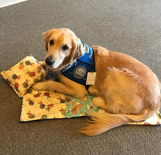 Charity is a comfort dog with Lutheran Church Charities. She lives with her caregiver in Brookfield.
