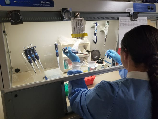 A Mayo Clinic medical laboratory scientist prepares a sample for COVID-19 testing.