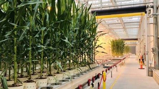 Bayer invested $100 million in its Marana greenhouse.