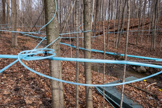 Lines run between tapped trees Thursday, March 5, 2020, at Falecki Farms in Richmond Township. John Falecki, who owns and operates the farm with his wife Lori, uses a vacuum system to pump sap out of trees and into storage tanks before being made into maple syrup.