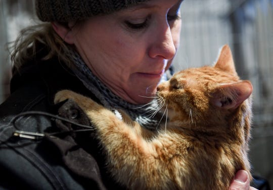 """Heather Swanson checks on her barn cats after doing her morning chores on Thursday, Feb. 20, 2020 in Canton. """"It is hard to foster but I can't help them if I keep them, so I have to let them go."""""""