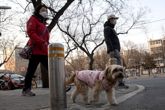 A resident wearing a mask walks her dog on the streets of Beijing on Thursday, March 5, 2020. Pet cats and dogs cannot pass the new coronavirus on to humans, but they can test positive for low levels of the pathogen if they catch it from their owners, according to Hong Kong's Agriculture, Fisheries and Conservation Department after a dog in quarantine tested weakly positive for the virus. (AP Photo/Ng Han Guan)