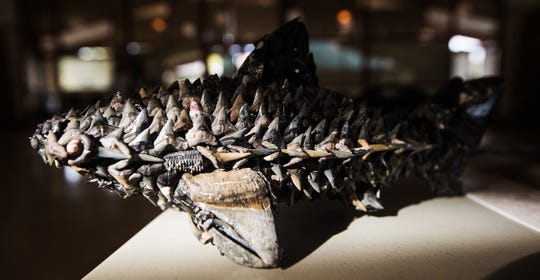 Sandy Canning, a member of the Caloosa Dive Club and current co-chair of the group's photo competition, made this shark teeth sculpture.