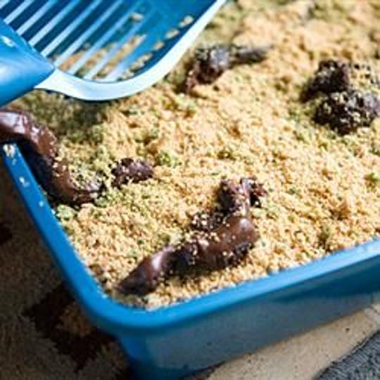 A Kitty Litter Cake will be for sale this April Fools by Haven Brannan to help raise money for a trip to Japan.