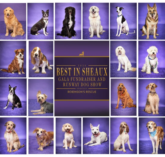 Robinson's Rescue will host its annual runway dog show and fundraiser gala, Best in Sheaux, on March 14. Vote for your favorite pup at robinsonsrescue.org.