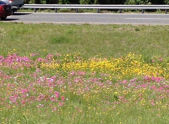 Spring is one of two wildflower seasons in Florida. Even the highway service plazas offer a spot to enjoy the beauty of the flowers.