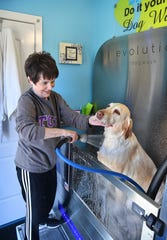 Dee Wood washes her yellow Labrador, London, in the automated DIY dog wash at Paw Spa on Kemp Boulevard.