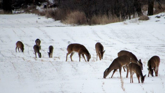 A few of the deer on Sunnybook Farm.