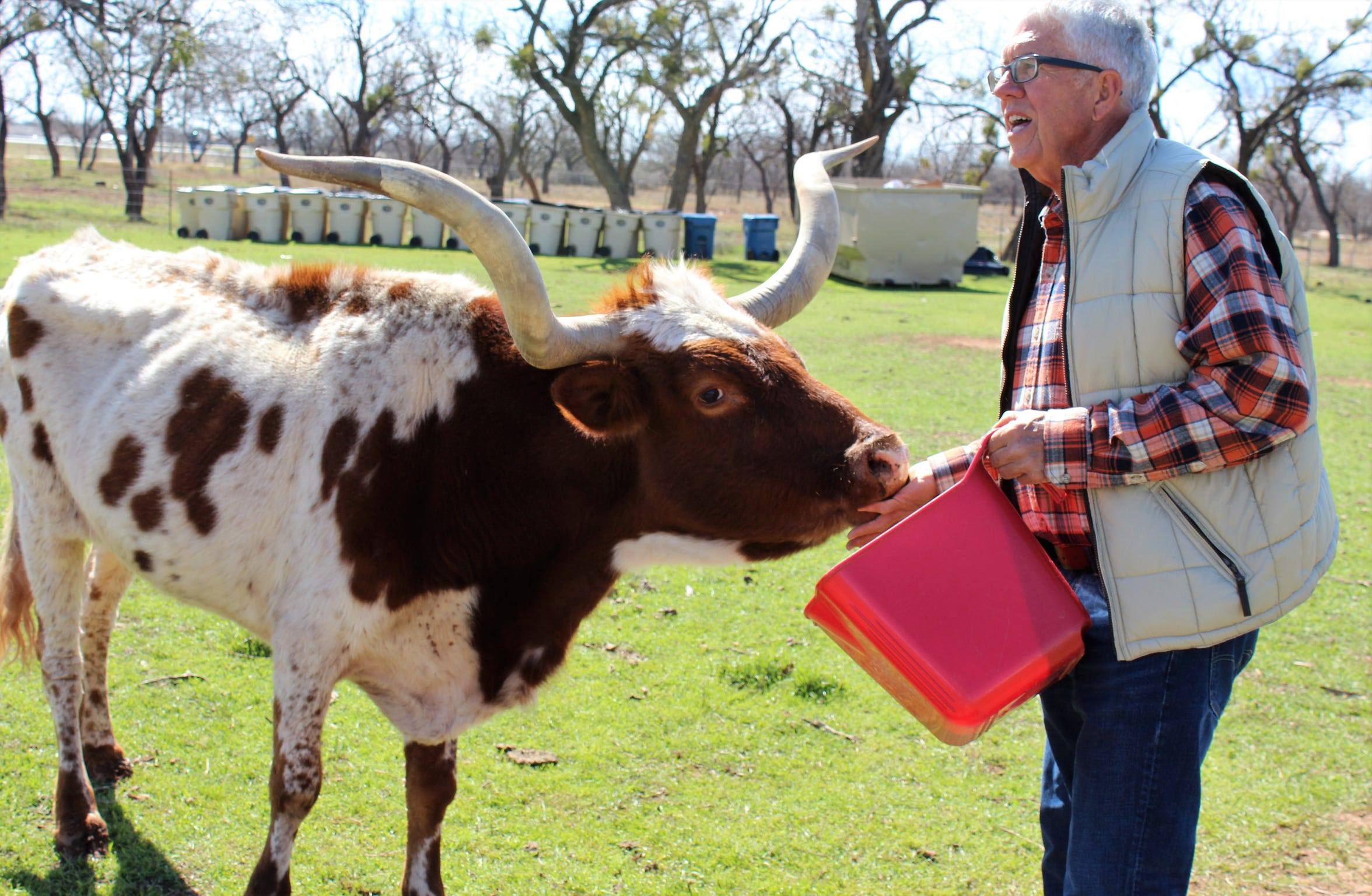 Bishop Powell feeds a longhorn at the Back Porch of Texas. The father of Outlaws & Legends Music Fest founder Mark Powell, he mows, cuts tree limbs and feeds an assortment of animals at the northwest Abilene site.