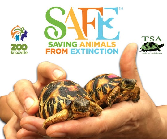 Zoo Knoxville and the Turtle Survival Alliance (TSA), have been awarded a $50,000 grant to support the return of 1,000 critically endangered Radiated Tortoises to the wild after they were rescued from an illegal wildlife trafficking operation in Madagascar.