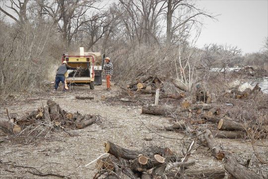 Workers from Forest Fitness run tree branches through a mulcher on March 10, 2020, during a project designed to remove invasive species from a 10-acre site in Farmington's Animas Park.