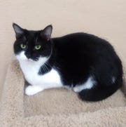 Briona is available for adoption at Sun Cities 4 Paws Rescue, 10807 N. 96th Ave., Peoria. Call 623-773-2246 after 10 a.m.
