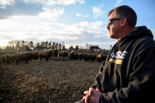 Dave Nolz checks on the bison Sunday, March 8, 2020 at Nolz Poor Farm Bison ranch in northern Sioux Falls. Dave and his son, Kadyn Nolz, also raise bison on their ranch near Hartford.