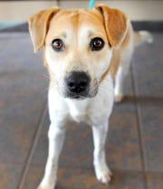 Meet Carly! She is a 2-year-old mix breed looking for her fur-ever home. She is very loving and good with other dogs. You can see Carly at the Humane Society of Wichita County.