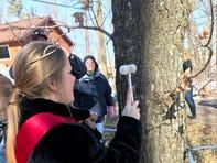 Alice in Dairyland Abigail Martin taps a sugar maple tree.
