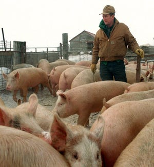 Despite a fall in pork production in China and Hong Kong, the USDA expects consumption to fall by 10% in 2019 and an additional 19% in 2020.