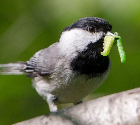 Douglas Tallamy will talk about backyard biodiversity to support wildlife on March 19 at the next Apalachee Audubon Society program meeting.