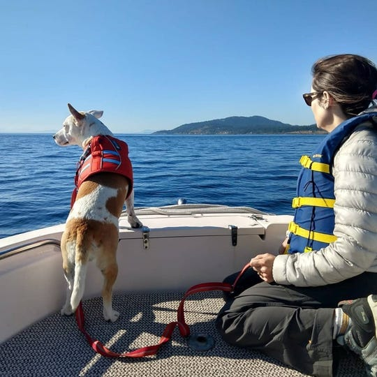 "Deborah Giles and her pup Eba search for whale feces in the Puget Sound. Eba is a ""conservation canine,"" a dog used in wildlife research."