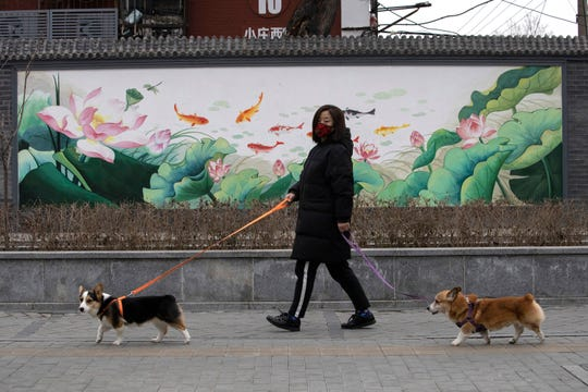 A woman wearing mask walks her dogs in Beijing. Pet cats and dogs cannot pass the new coronavirus on to humans, but they can test positive for low levels of the pathogen if they catch it from their owners.
