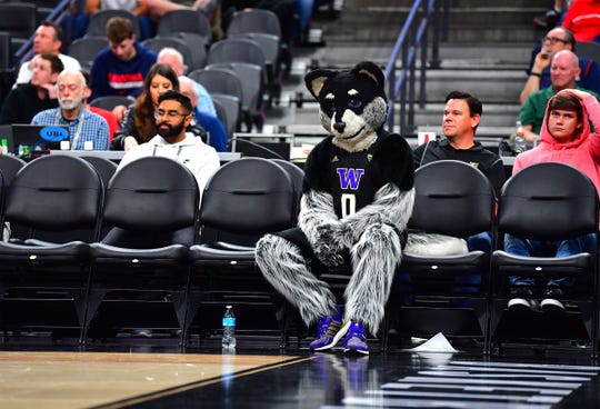 Washington Huskies mascot Harry the Husky sits in a row of empty chairs on the floor during the second half of an NCAA tournament game between the Huskies and the Arizona Wildcats at Mobile Arena.