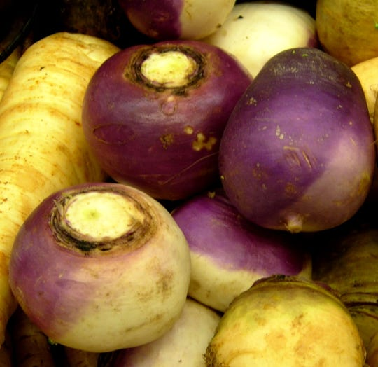 Turnips are a common root vegetable. Other easily recognized taproots include radish, parsnip, and carrot.