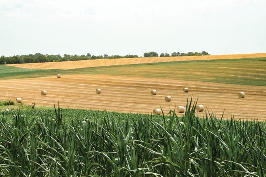 Diversification on the farm can entail everything from the types of crops gown to the contracts used to make crop sales.