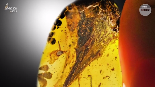 It's a bird! It's a dinosaur! No, apparently it's a lizard, as study authors issue retraction