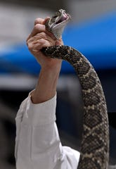 Larry Martin holds a western diamondback rattlesnake up in one hand as he holds the tail out in the other for visitors to touch Friday.