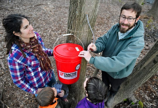 Meredith Massey and her husband Jason Simmons are participating in Stockton University's pilot program to produce their own maple syrup from red maples on their farm in Hammonton.