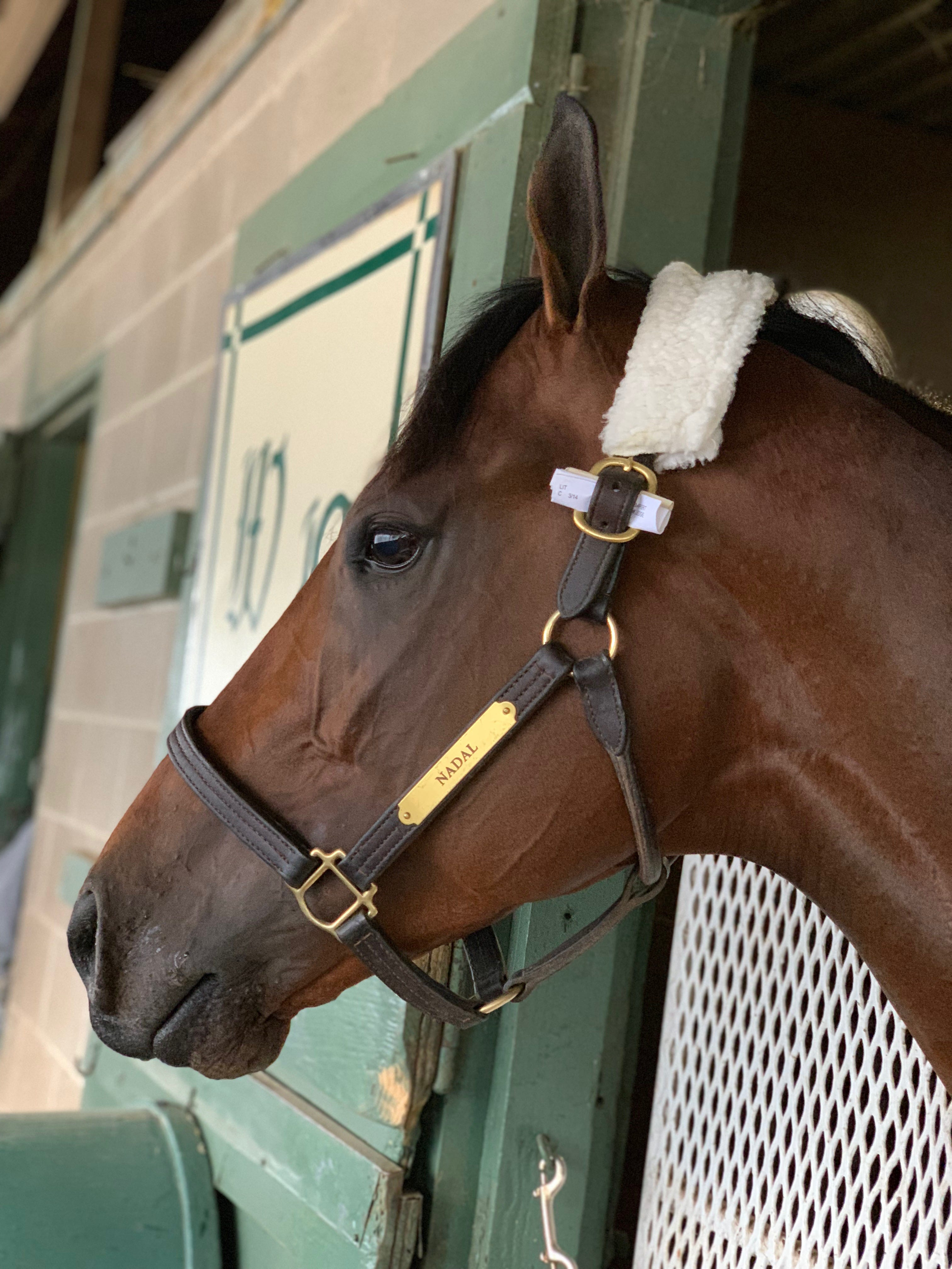 Kentucky Derby Prep Races What To Know About Saturday S Races