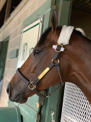 Nadal is the morning-line favorite for Saturday's $1 million, Grade 2 Rebel Stakes at Oaklawn Park in Hot Springs, Arkansas.