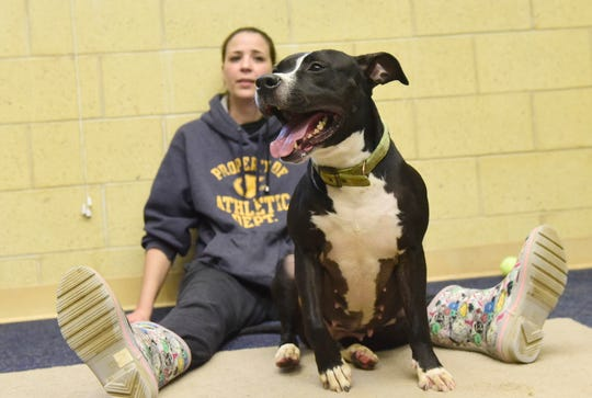 Bella, a 3-year-old pit bull mix, has been waiting for adoption at the Richland County Dog Shelter since July.